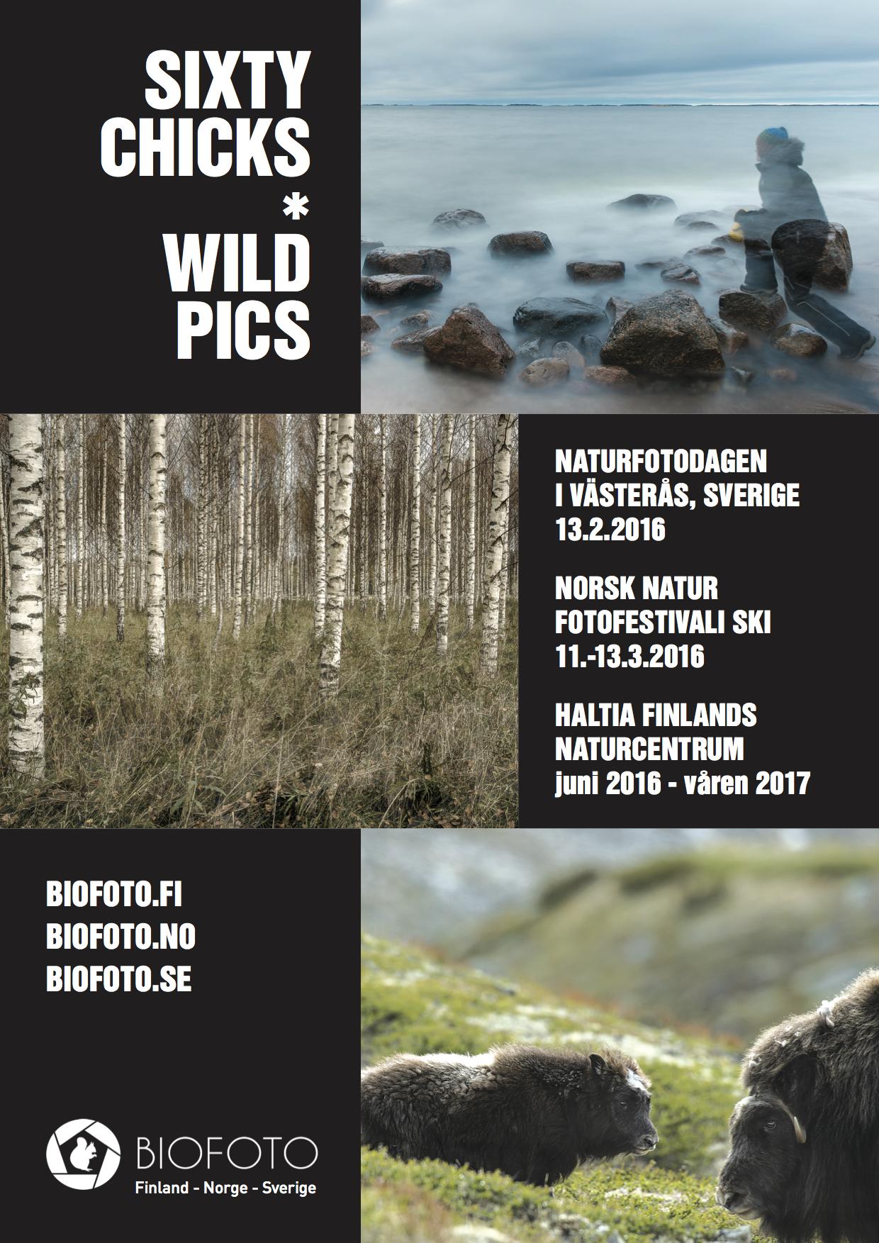Sixty Chicks & Wild Pics